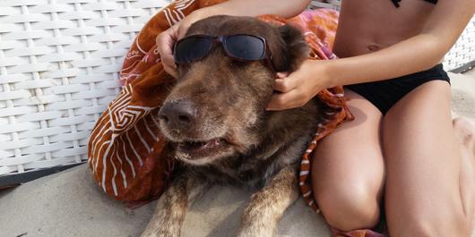 Hotel Hund Sylt